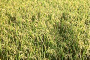 Các loại Đất Nông nghiệp, Đất phi nông nghiệp và đất chưa sử dụng