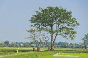 Không được nợ tiền thuế đất khi chuyển đổi mục đích sử dụng đất tại Quận Tân Bình